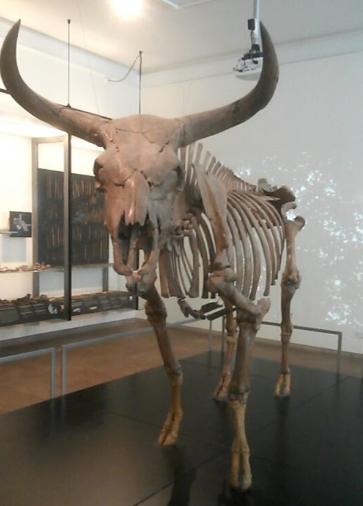 A reindeer in the museum